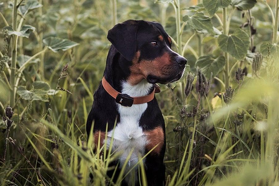bild anwendungsgebiet gps tracker hund pet - Profitiere als Hundebesitzer von einem PAJ GPS Tracker
