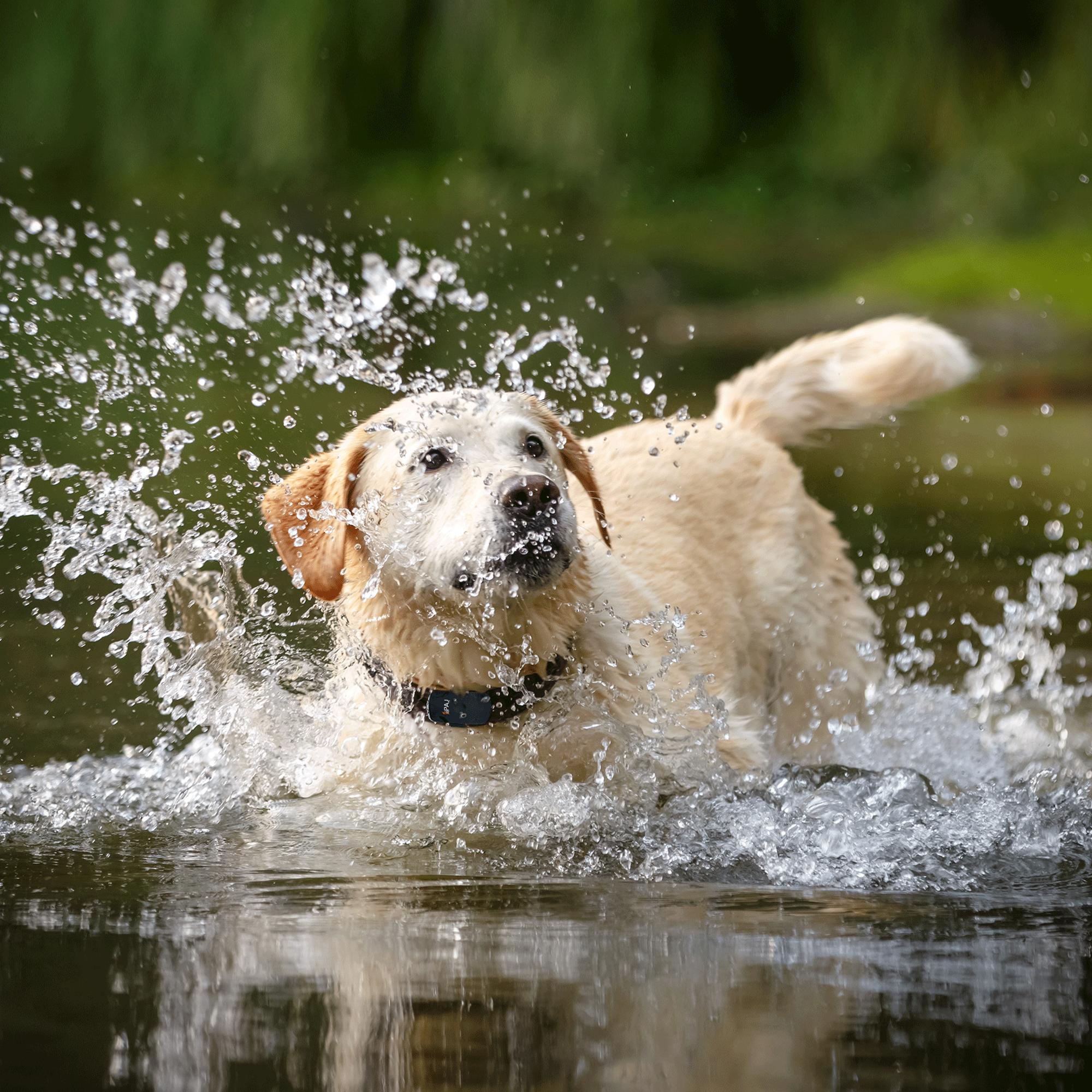 Beispielbild Vorteil GPS Tracker für Hunde
