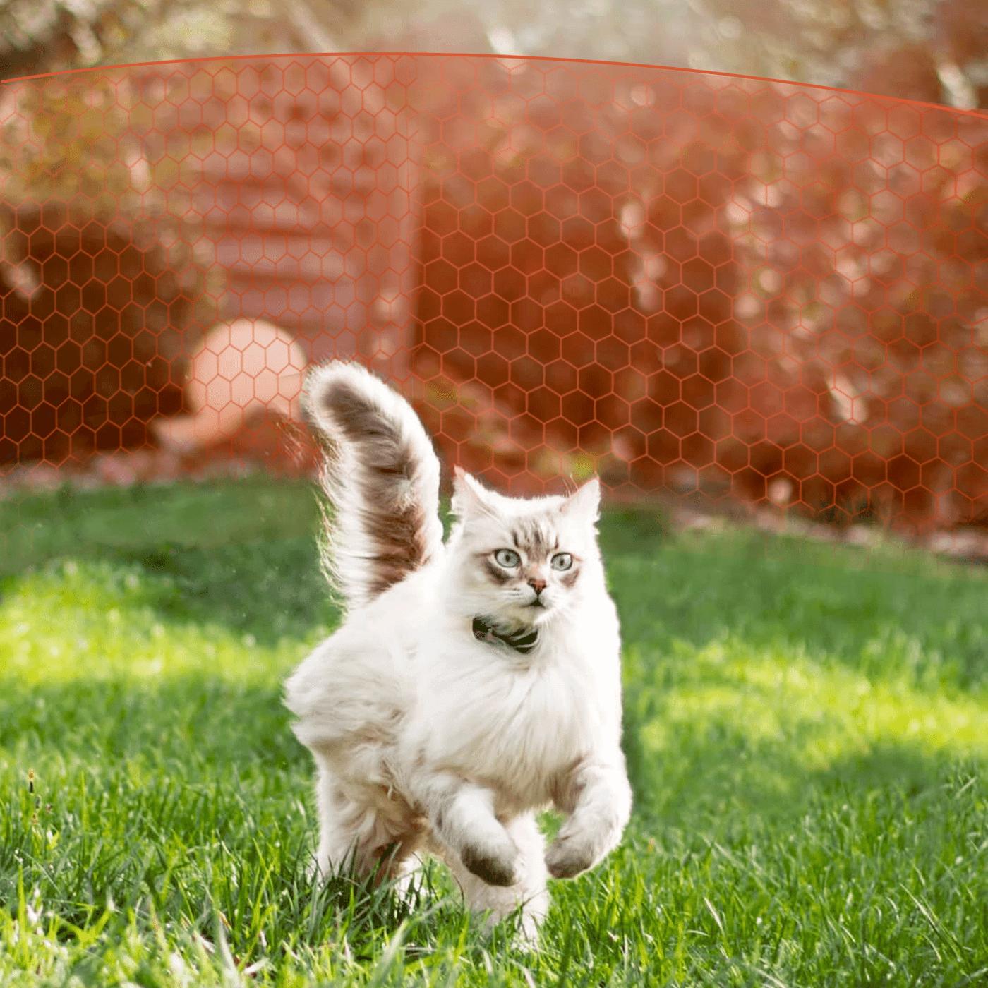 Vorteil GPS Tracker für Katzen