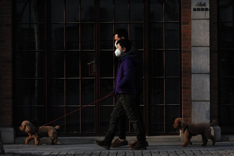 Haustiere Und Covid19