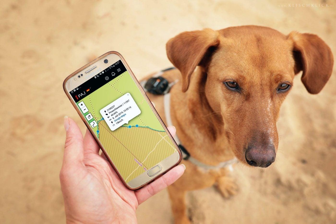 bild anwendungsgebiet gps tracker hund app pet finder 1400x934 - AG GPS Tracker für Hunde