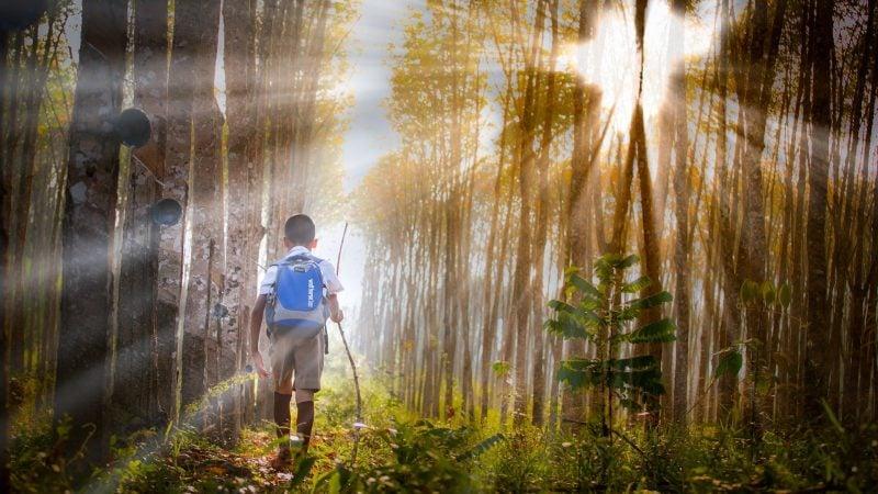 bild anwendungsgebiet gps tracker kinder rucksack wald 800x450 - GPS Tracker für Kinder: Vorteile und Risiken